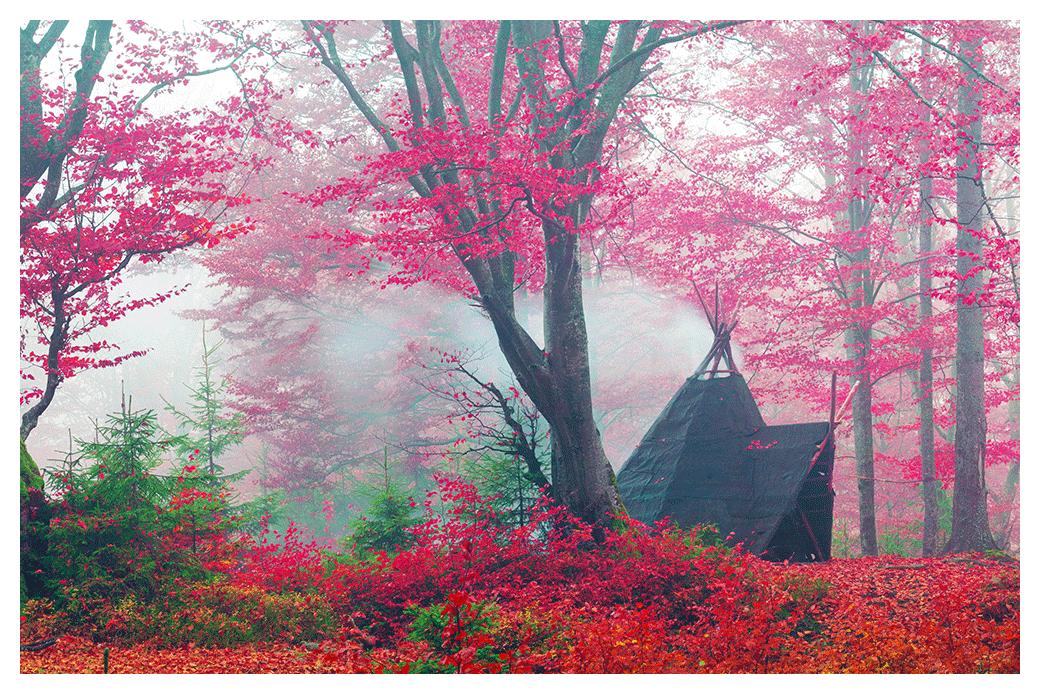 Farbe, Raum & Feng Shui Blog – Hereinspaziert!